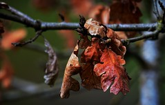 Sometimes fall just does not go away (foto tuerco) Tags: leaves fall autumn art oregon