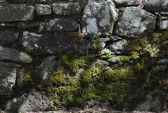 Il Glicine e La Lanterna (Elizabeth Almlie) Tags: italy toscana tuscany vignola agriturismo ilglicineelalanterna stone wall moss ferns