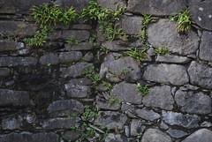 Il Glicine e La Lanterna (Elizabeth Almlie) Tags: italy toscana tuscany vignola agriturismo ilglicineelalanterna stone wall ferns moss