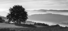 Vila de Cruces (Noel F.) Tags: sony a7 vila de cruces galiza galicia neboa fog mist a7riii a7r iii fe 100400 gm