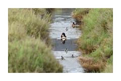 Paseo familiar (scandelaibz) Tags: parquesessalines21519 ibiza eivissa lago parque