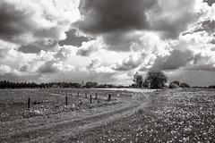 Sint-Pieters-Rode (BE) (de_frakke) Tags: landscape landschap bw zwartwit holsbeek sky wolken paardenbloemen dandelions weide meadow hageland