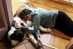 the sleeping beauties (me, paolo and the seven wonders + two&little3) Tags: johnny jonathan soraya cane dog hund perro chien kutya sanbernardo dormire