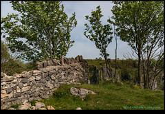 190515-4527-M50.JPG (hopeless128) Tags: fields sky tree wall cheddargorge uk 2019 cheddar england unitedkingdom
