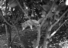 In the Woods (masamiy21) Tags: adonalrodinal oriental newseagull100 retinaiic schneiderkreuznach f28 50mm xenon