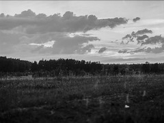 Tasma42Lasa800(15) (Timur Mukhmadeev) Tags: mamiya 645 mformat landscape bw blackwhite film filmphoto filmphotography mamiya645
