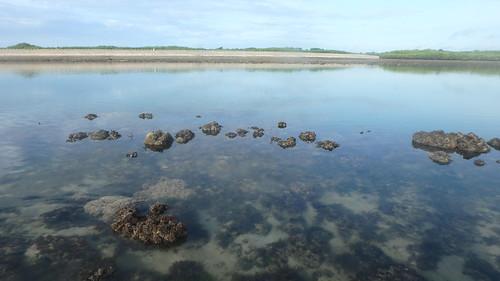 Living reefs of Terumbu Semakau, May 2019