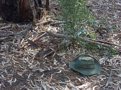 Hat Blending In (mikecogh) Tags: lockleys linearpark hat lost leaves bush fallen context