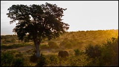 Sunset over the valley (Venkat Mangudi) Tags: kruger autumn elephant goldenhour sunset valley