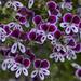 Flowers at Ravijoenlahti 132