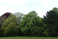 Parc des Raisses @ Annecy-le-Vieux (*_*) Tags: europe france hautesavoie 74 annecy annecylevieux 2019 printemps spring may parcdesraisses park savoie