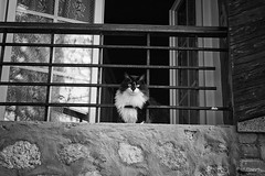 Regard du chat (arrif-mehdi) Tags: cat chat noir etblanc eyes regard vision expression animal vie life meh photographie beautiful amazing