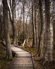 Resting Place (lclower19) Tags: laudholmfarm wells maine bench boardwalk trees path