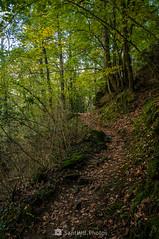 No lo recordaba así (SantiMB.Photos) Tags: 2blog 2tumblr 2ig joanetes lavalldenbas garrotxa girona otoño autumn bosque forest camino way path sendero geo:lat=4211588980 geo:lon=239864680 geotagged santestevedenbas cataluna españa