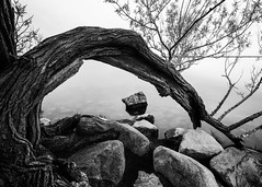 Rock and Bend (John Westrock) Tags: blackandwhite monochrome tree rock longexposure nature water wisconsin madison canoneos5dmarkiii canonef1635mmf4lis