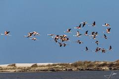 J.Adilson.1 - Flamingos na Lagoa do Peixe (Clube do Fotógrafo de Caxias do Sul) Tags:
