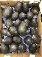 Avocados imported from Mexico Yokohama, Japan May 22, 2019 (DigiPub) Tags: 1150931838 gettyimages