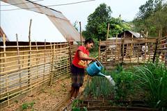 24951_197 (FAO News) Tags: la laopeoplesdemocraticrepublic fao mission laooudamxay farmernutritionschool fns local children farmer nutrition school kitchen garden water houayjay village irrigation