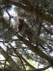 The Explorer (HonleyA) Tags: cat tree climbing mobilephone