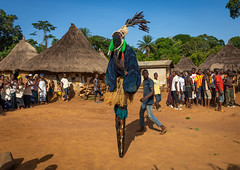 The tall mask dance with stilts called Kwuya Gblen-Gbe in the Dan tribe during a ceremony, Bafing, Gboni, Ivory Coast (Eric Lafforgue) Tags: adults africa africanethnicity animism animist bafing ceremony colourimage côtedivoire cult cultures custom dan dance dancers dancing day ethnic ethnology folklore gboni groupofpeople horizontal indigenousculture ivorycoast ivory8379 kwuyagblengbe mask masked outdoors performance performing raffiafibers rite secret society stilts tallmask traditionalclothing travel tribal tribe westafrica women yacouba yacuba