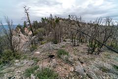 1905 Burro Fire Burn on the Guthrie Mountain Ridge below Point 7162 (c.miles) Tags: burrofire coronadonationalforest guthriemountain point7162 santacatalinamountains