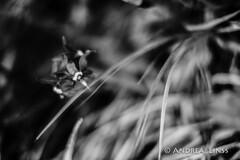 still lifes ... (andrealinss) Tags: stilllifes schwarzweiss bw blackandwhite andrealinss 35mm garden garten jardin detail makro