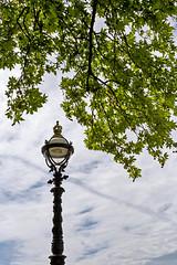 Londres (2015) / London (2015) (Joseff_K) Tags: floorlamp lampadaire summer ete tree arbre londres london