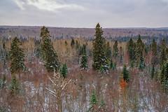 Superior National Forest at Sawbill Trail, Minnesota (Tony Webster) Tags: minnesota northshore northernminnesota sawbilltrail superiornationalforest forest snow trees winter tofte unitedstatesofamerica