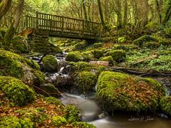En forêt (ludivine.dias) Tags: foret forest nature water eau ruisseau nièvre bourgogne france
