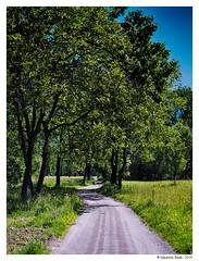 passeggiata bucolica (Maurizio Badà) Tags: oasi verde alberi prato natura campagna sentiero