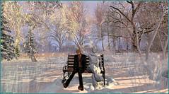 Vais je congeler aussi ? (Tim Deschanel) Tags: tim deschanel sl second life exploration landscape paysage serendipity hoch hiver winter arbre tree banc