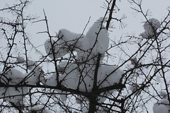 Winter 2012, 1 (sohvimus) Tags: snow lumi talvi vinter snö winter gaeaf hiver