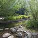 Sapokka Water Garden 512