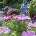 Flowers at Sapokka Water Garden 491