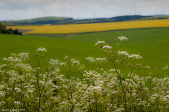 """Gareth's Photo of the Week 20 """"Cow Parsley and Fields"""""""