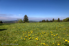 Osterzgebirge bei Schellerhau (binax25) Tags: osterzgebirge mittelgeirge spring frühling landschaft landscape trees bäume wald wiese