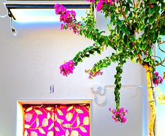 Glowing EnTree (noluck) Tags: andalucía baum blüten es hauswand solarisation blossoms colorful colourful deskewed entzerrt experimentell farbenfroh glowing green grün journey:es=andalucía201809 tree wall fuchsia pink urban