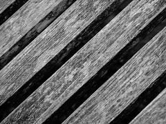 Diagonals (Ken Pick) Tags: blackandwhite bellevue 119picturesin2019 bellevuebotanicalgardens washington diagonals