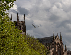 Worcester Cathedral (ivanstevensphotography) Tags: cathedral trees bushes clouds spires history religion christian gull seagull birds fly glide