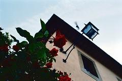 Il volo e la bellezza (michele.palombi) Tags: rosa analogic film 35mm kodak portra400 c41 negativo colore arezzo tuscany
