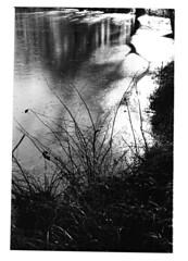 Nessie! The shadow returns . (SEVEN7H SON) Tags: yashica fx3 super 2000 carlzeiss50mmf1 7 pellicola kodak tri x 400 iso multigrade ilford loch ness