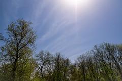Hello, Old Friend! 142/365 (Watermarq Design) Tags: blue bluesky sun sunlight sunshine sky 365project