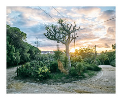 Tapada das Necessidades, Lisboa (Sr. Cordeiro) Tags: tapadadasnecessidades lisboa lisbon portugal jardim park vista view cactos cactuses nuvens clouds pôrdosol dusk sunset fuji fujifilm xt20 zhongyi lensturboii lensturbo focalreducer olympus om zuiko 24mm f2 f20