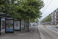 Laan van Meerdervoort (Pieter Musterd) Tags: tramhalte muurbloemweg meerenbos laanvanmeerdervoort bomen pietermusterd musterd canon pmusterdziggonl nederland holland nl canon5dmarkii canon5d denhaag 'sgravenhage thehague lahaye