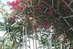 SoundScapes (David Guidas) Tags: miami soundscape park flowers tropical palm trees color leica m9 summicron 50mm