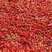 Red Hot CHilis, Myanmar