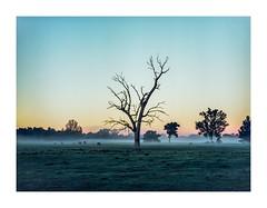 Mamiya 645 Super, Ektar 100 (G H Photography) Tags: mamiya 645 super ektar 100 kodak medium format australia sunrise fog
