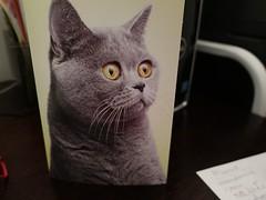 Daily Colours - Amazing Cat (Pushapoze (MASA)) Tags: card greeting cat