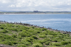 Inner Farne (ukalex) Tags: inner farne birds bird nature puffin puffins wildlife sea rocks sky travel