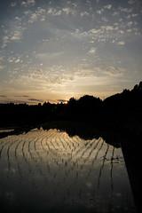 20190515A73_8126 (Gansan00) Tags: ilce7m3 α7ⅲ sony zeiss japan 山口県 yamaguchi 日本 landscape snaps ブラリ旅 中須棚田 棚田 shunan nature 5月 fe35mmf28 夕景 夕陽 sunset